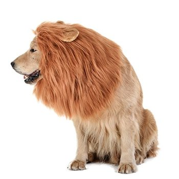 Where Can I Find A Lion Mane Dog Costume? Here's The Best 5