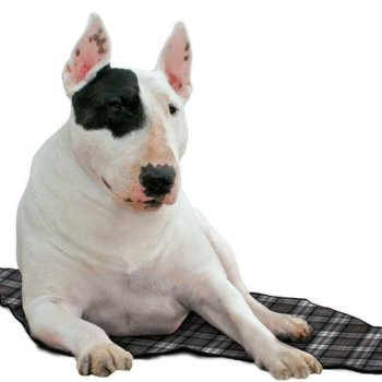 What's The Best Cooling Pad For My Dog? Here's Our Top Picks 10