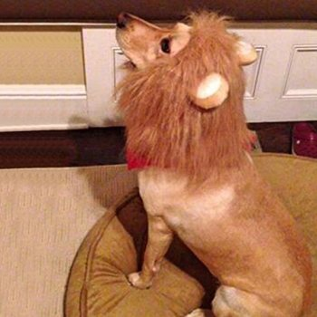 Where Can I Find A Lion Mane Dog Costume? Here's The Best 2