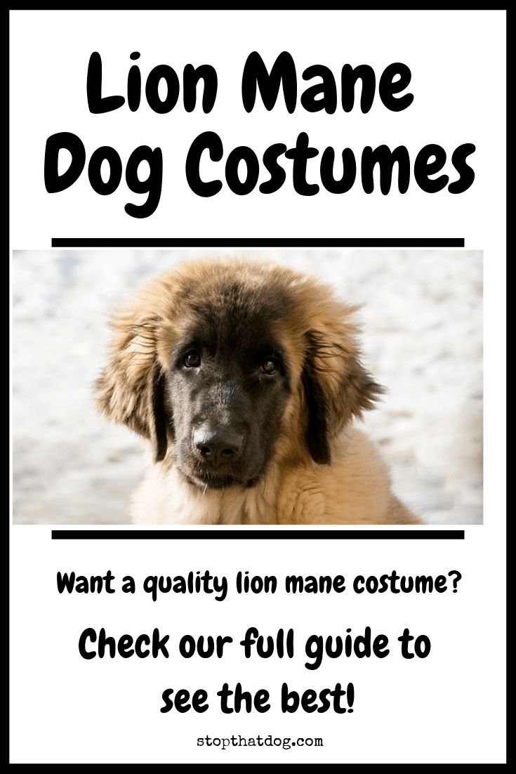 Looking for a stylish or cute lion mane costume for your dog? Our guide reveals the best options currently on the market.