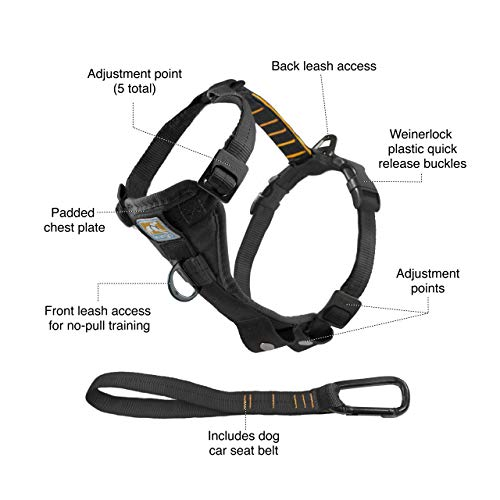 Kurgo Tru-Fit Smart Harness - Here's Our Thoughts 2