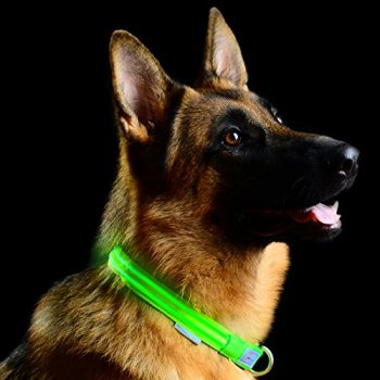 The Best LED Dog Collars - Our In-Depth Guide (2020) 10