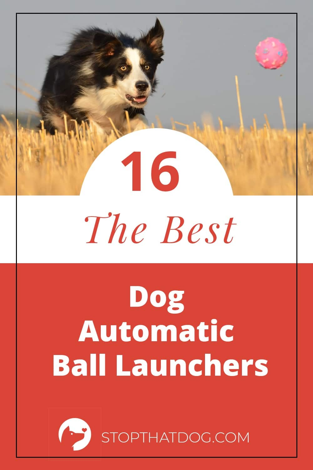 Want to play fetch with your dog? These automatic dog ball launchers are a lot of fun, and they\'re fantastic for providing some extra activity for your dog. This guide shows you a wide range of ball launchers to suit your needs.