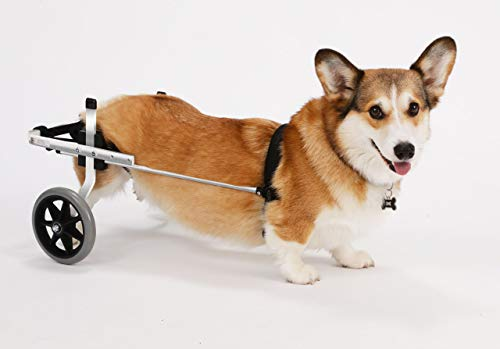 The Best Dog Wheelchairs For Small, Medium, & Large Breeds Reviewed (2020) 6
