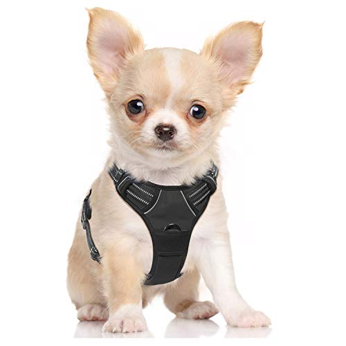 What's The Best Small Dog Harness? Our Favorite Picks 6