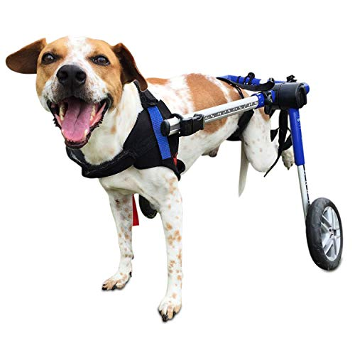 The Best Dog Wheelchairs For Small, Medium, & Large Breeds Reviewed (2020) 7