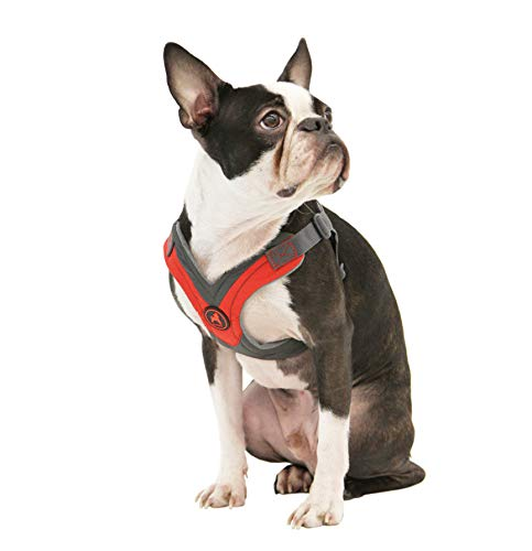 What's The Best Small Dog Harness? Our Favorite Picks 10