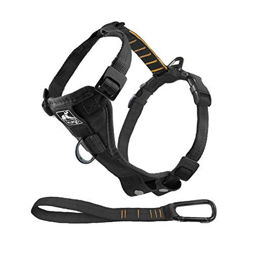 What's The Best Small Dog Harness? Our Favorite Picks 3