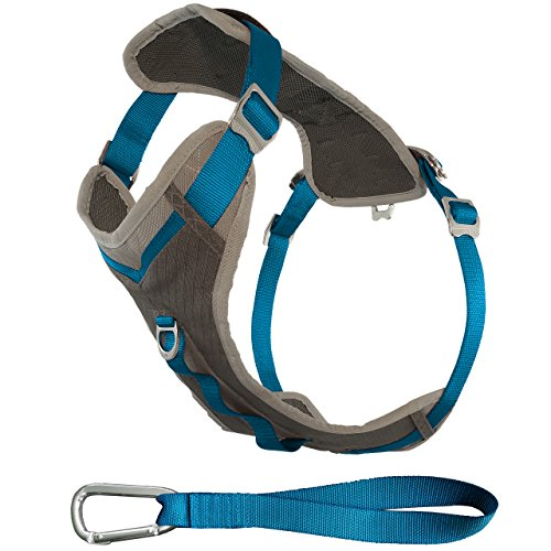 What's The Best Small Dog Harness? Our Favorite Picks 16