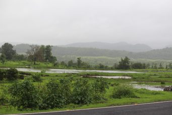 Malshej Ghat - Greenary