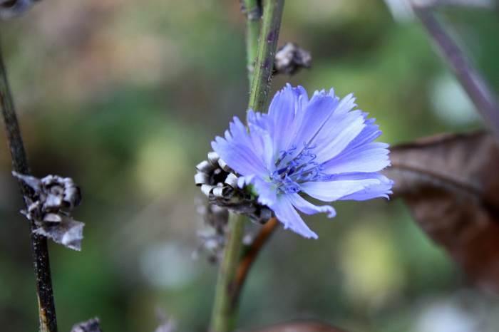 Wald Mühldorfer Hart Blume