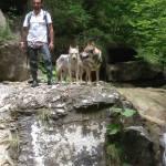 Ciro insieme ai suoi cani. O sono veri lupi?