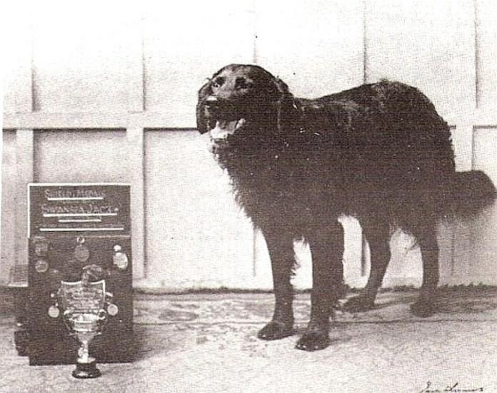 Swansea Jack, il cane eroe che ha dato il soprannome allo Swansea