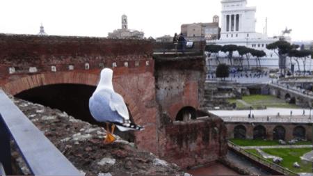 3spec Roma-3-Mercati di Traiano 8