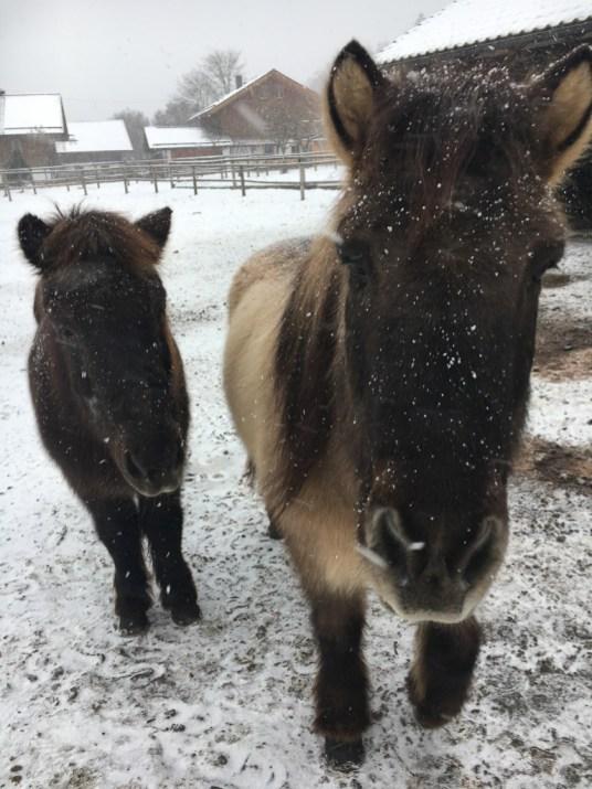 Isländer im Schnee