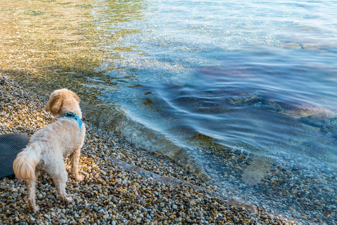 reisen-mit-hund-nach-kroatien