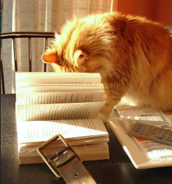 Cat_with_book_2320356661