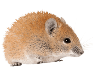 Church mouse... from May 2018 blog on Solitary Rose excerpt from CL Charlesworth, fiction writer