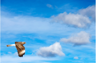 fly with your dreams, eagle soaring through a semi cloudy sky