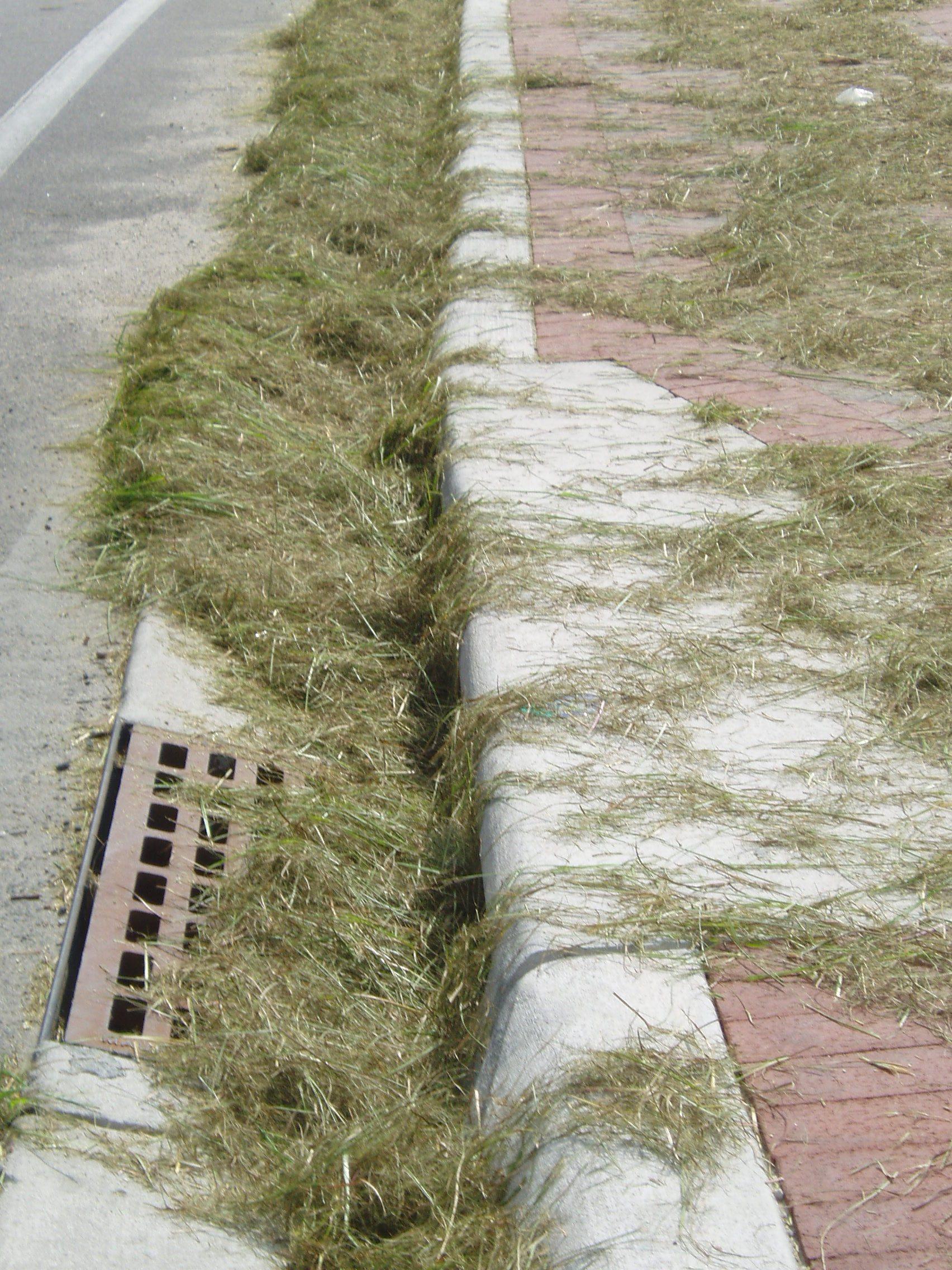 Mulching Leaves Lawn Mower