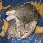 A very young Grum, you can see some of the bald patches on her feet still