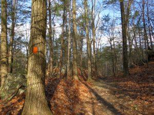 Pinewoods Park, New York