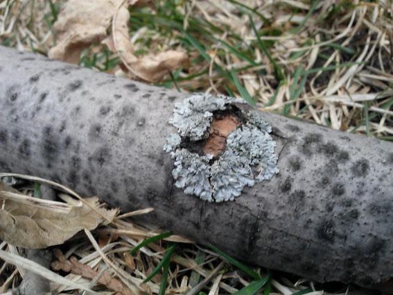 molded-wood