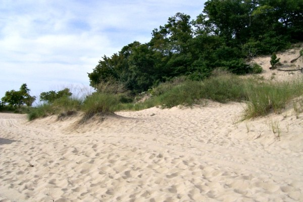 Warren dunes -grass and trees