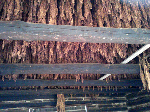 tobacco-drying-the-homeplace-tennessee