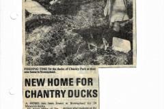 1979-Muscovey-Ducks-arrive-at-Old-farm-Mill-street