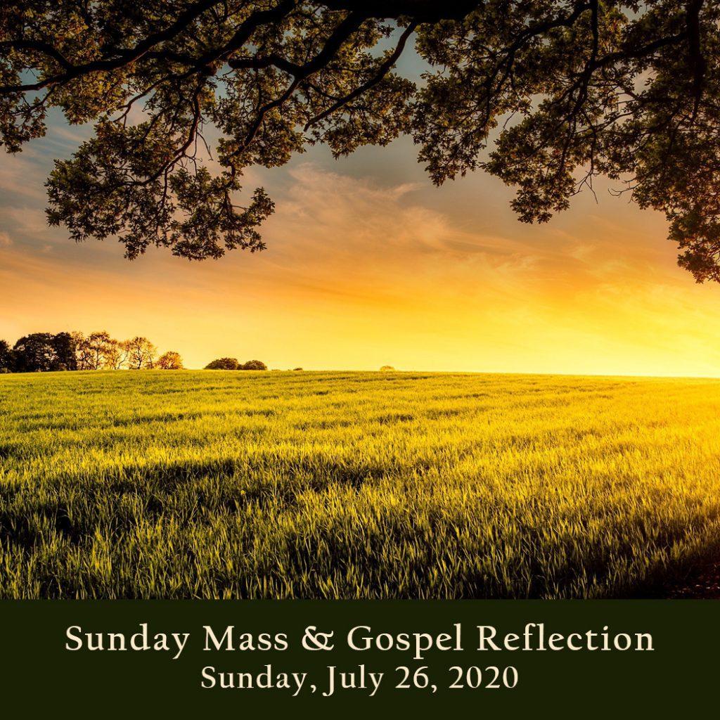 Sunday Mass And Gospel Reflection Sunday July 26