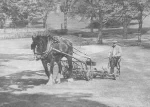 Photo: Mr F Rodwell (Rosemary's Dad) cutting the grass in Western Park in 1959