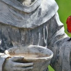 Cardinal on statue