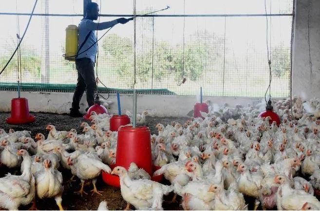L-Ewwel Każ Ta' Persuna Infettata Bil-Virus H5N8 (Bird Flu) Irrappurtat Fir-Russja