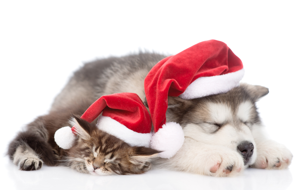 Animal Welfare Organizations To Consider Giving Christmas
