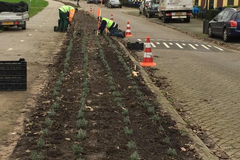 De aanplant (straightfrom.nl)