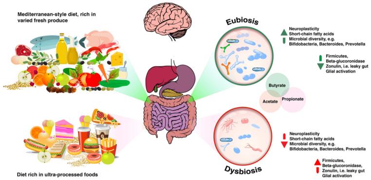 mikrobioma dysbiosis)