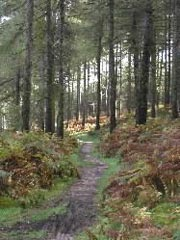 Cannock Forest