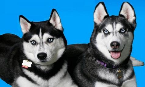 Concurso Perros Zahara