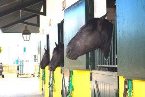 Pferde und Kutschen