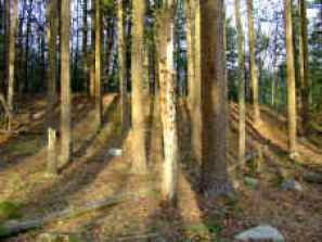 Nearby Forest - History