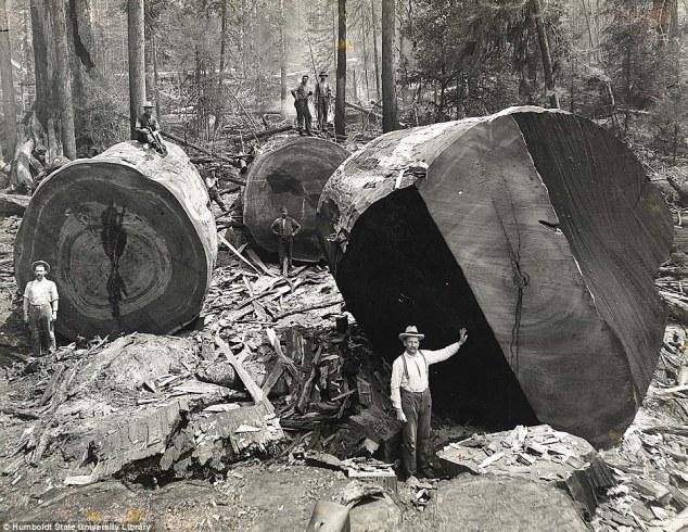 lumberjack-worlds-most-dangerous-jobs-top-10