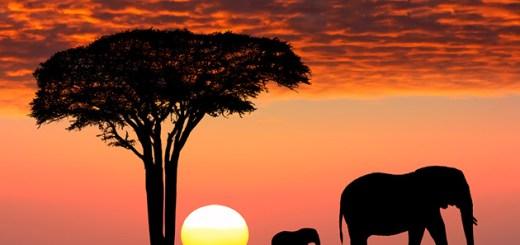 african safari tourist travel destination 2017