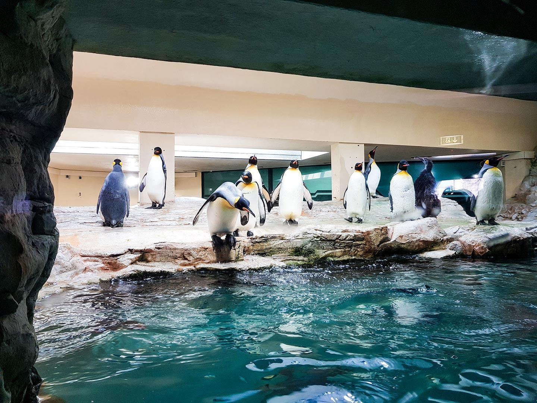 Živalski vrt Dunaj in izlet v Schonbrunn