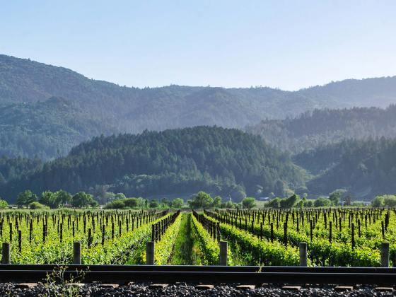 Napa Valley: degustacija vin in pohodništvo