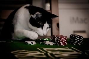 cat gamble