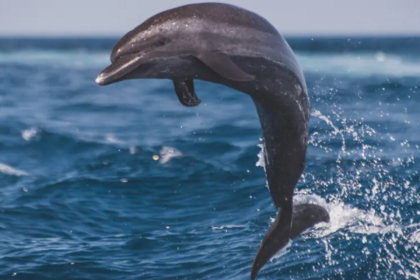 Learn to pivot like a dolphin