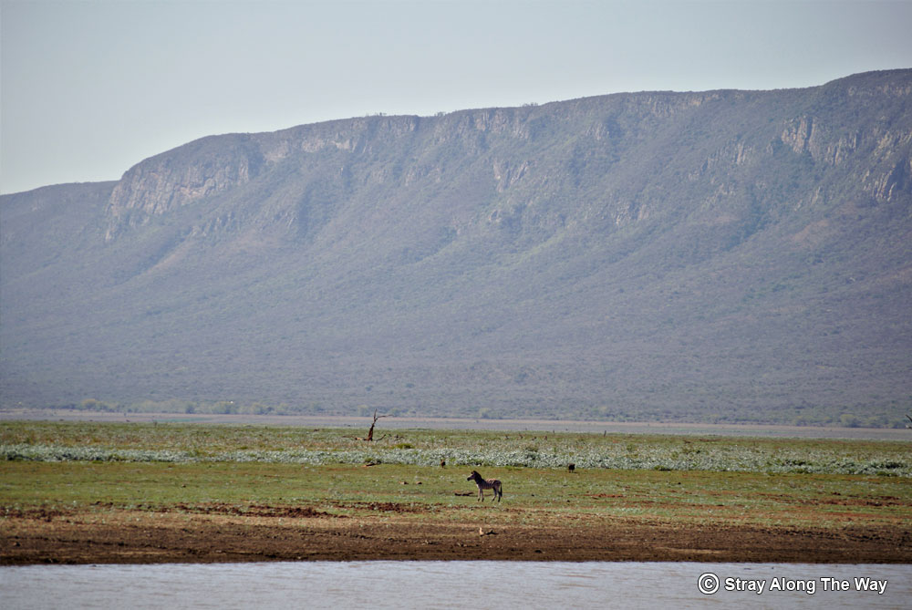 Zebra on the banks of the Jozini Dam with the Lebombo Mountains in the distance