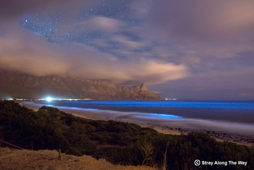 Bioluminecent Plankton Kogel Bay