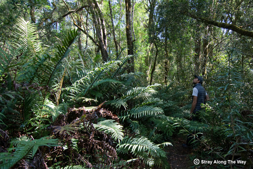 Bevan getting wonderfully lost in the Knysna Forest.
